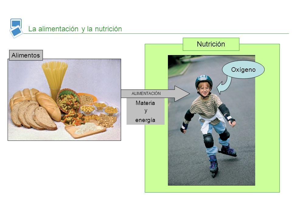 La alimentación y la nutrición Nutrición Oxígeno ALIMENTACIÓN Materia y energía Alimentos