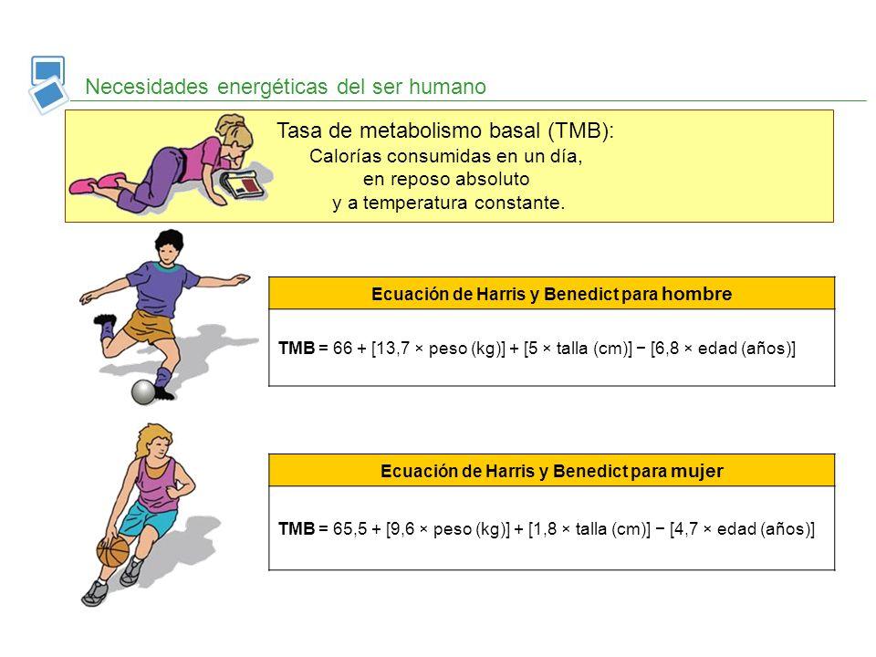 Tasa de metabolismo basal (TMB): Calorías consumidas en un día, en reposo absoluto y a temperatura constante. Necesidades energéticas del ser humano E