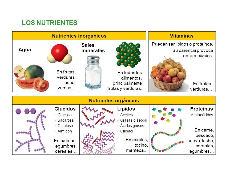 Proteinas Grasas y Lipidos Lípidos Aceites Grasas o