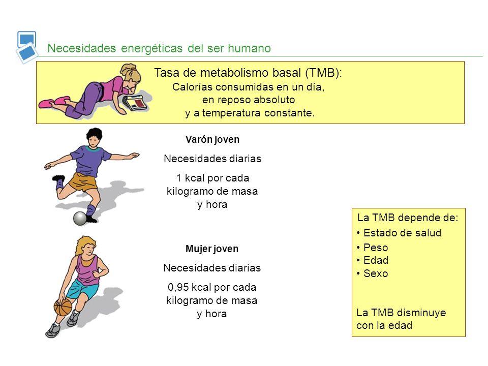 Tasa de metabolismo basal (TMB): Calorías consumidas en un día, en reposo absoluto y a temperatura constante. Necesidades energéticas del ser humano V