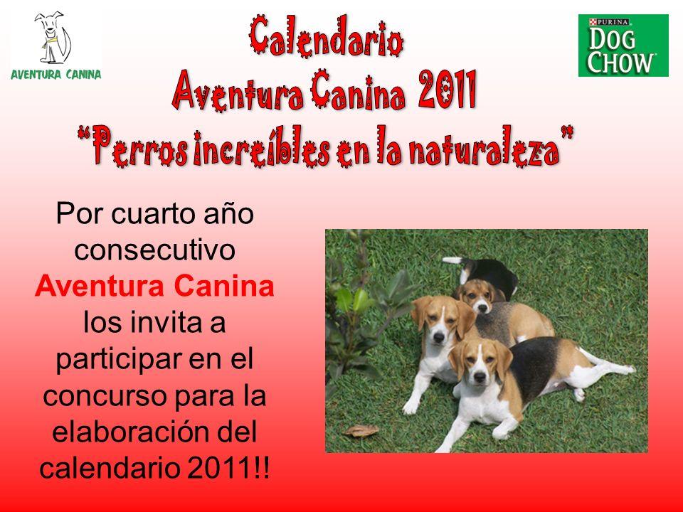 Por cuarto año consecutivo Aventura Canina los invita a participar en el concurso para la elaboración del calendario 2011!!