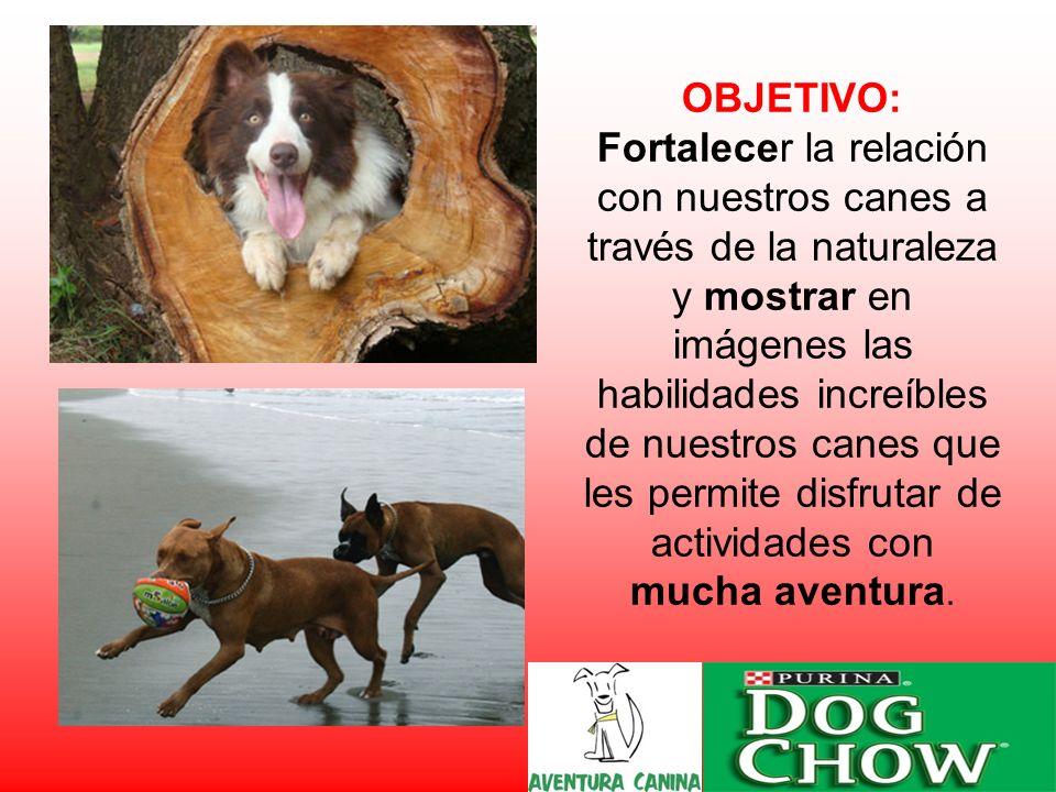 OBJETIVO: Fortalecer la relación con nuestros canes a través de la naturaleza y mostrar en imágenes las habilidades increíbles de nuestros canes que les permite disfrutar de actividades con mucha aventura.