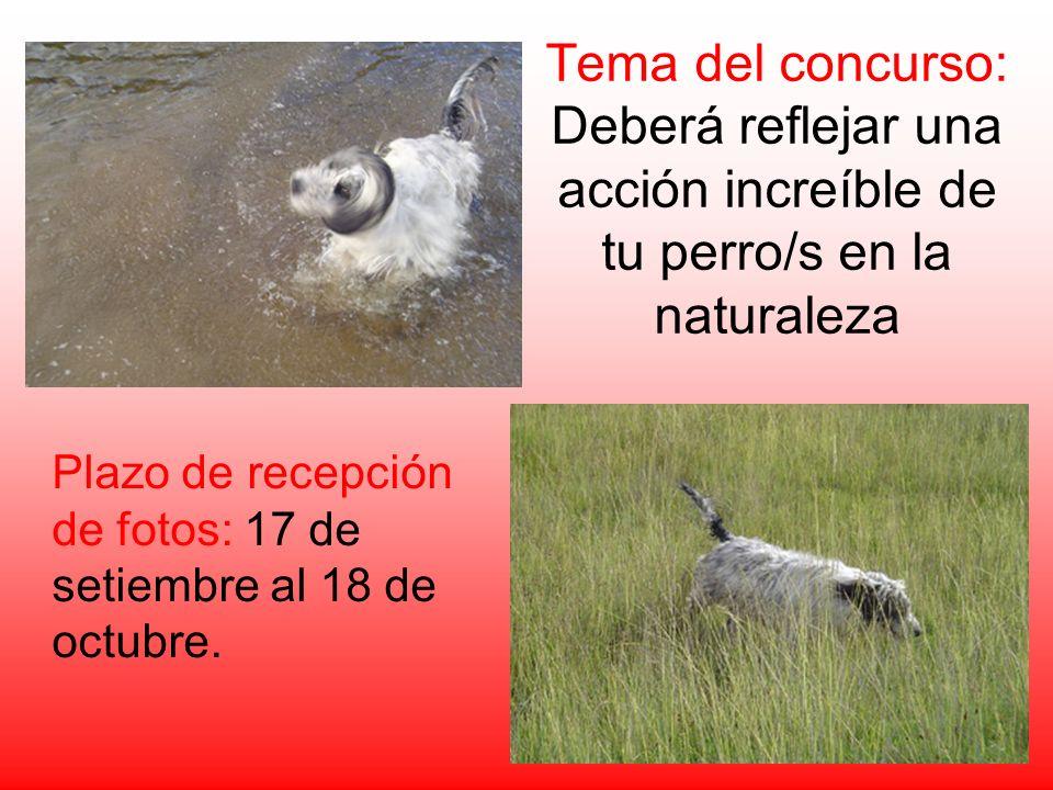 Tema del concurso: Deberá reflejar una acción increíble de tu perro/s en la naturaleza Plazo de recepción de fotos: 17 de setiembre al 18 de octubre.
