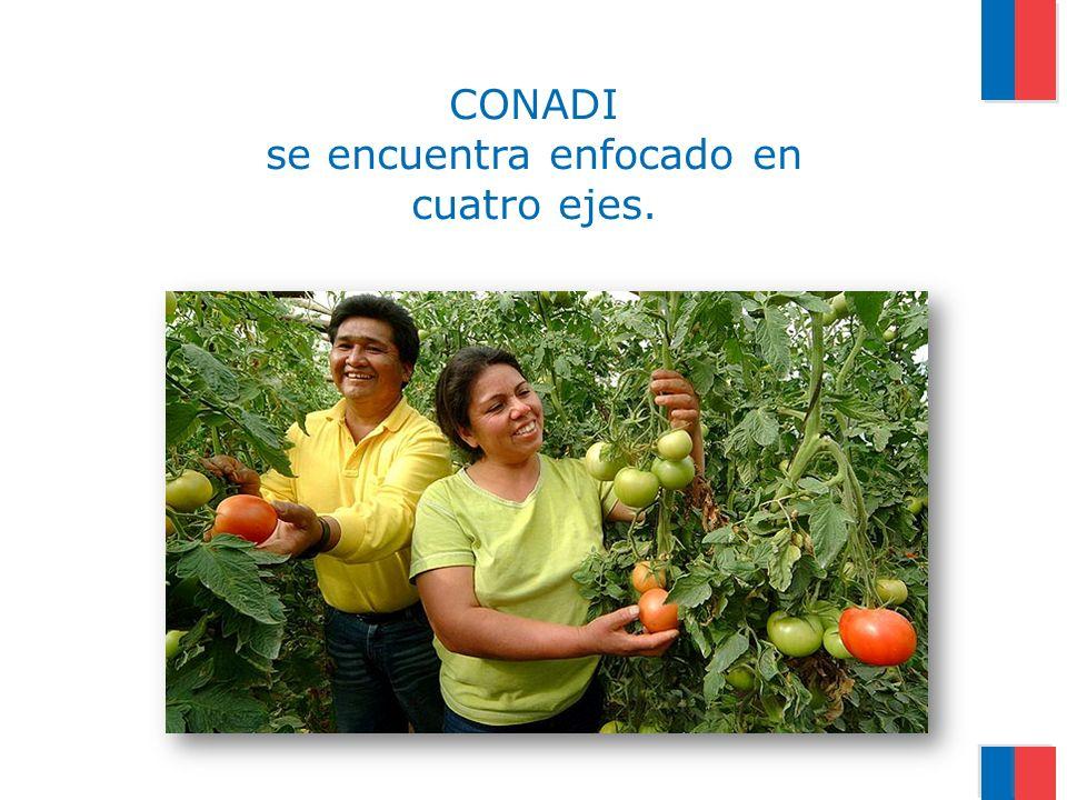 CONADI se encuentra enfocado en cuatro ejes.