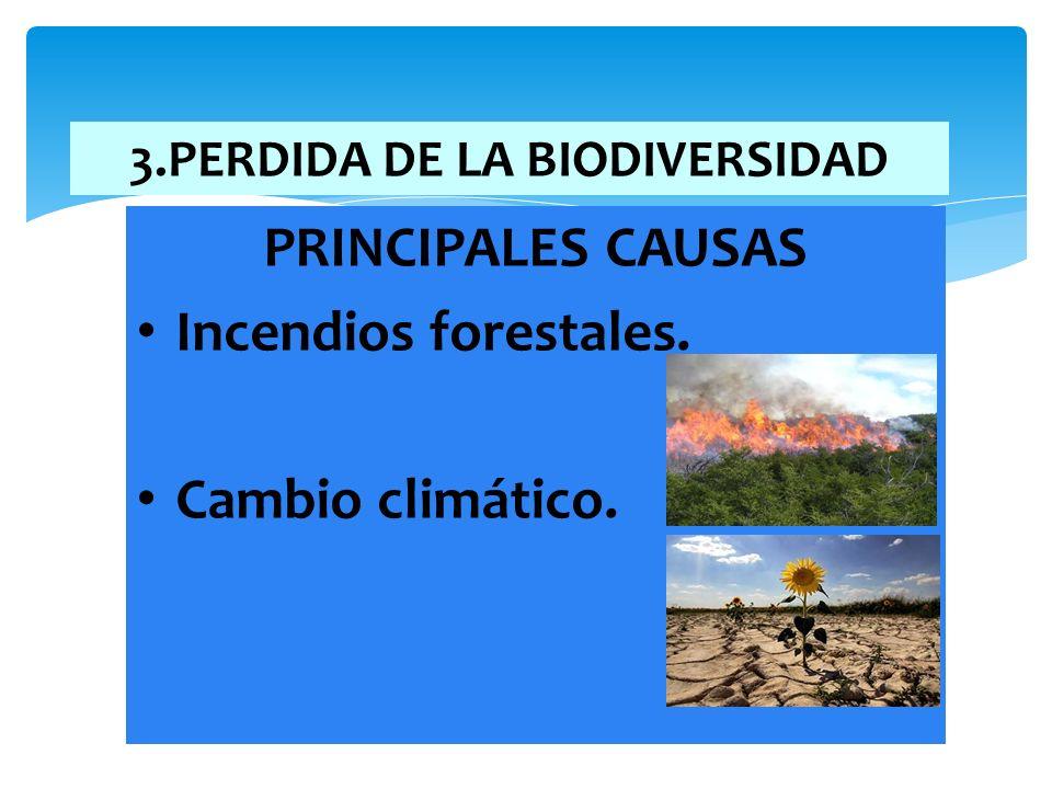 3.PERDIDA DE LA BIODIVERSIDAD PRINCIPALES CAUSAS Incendios forestales. Cambio climático.