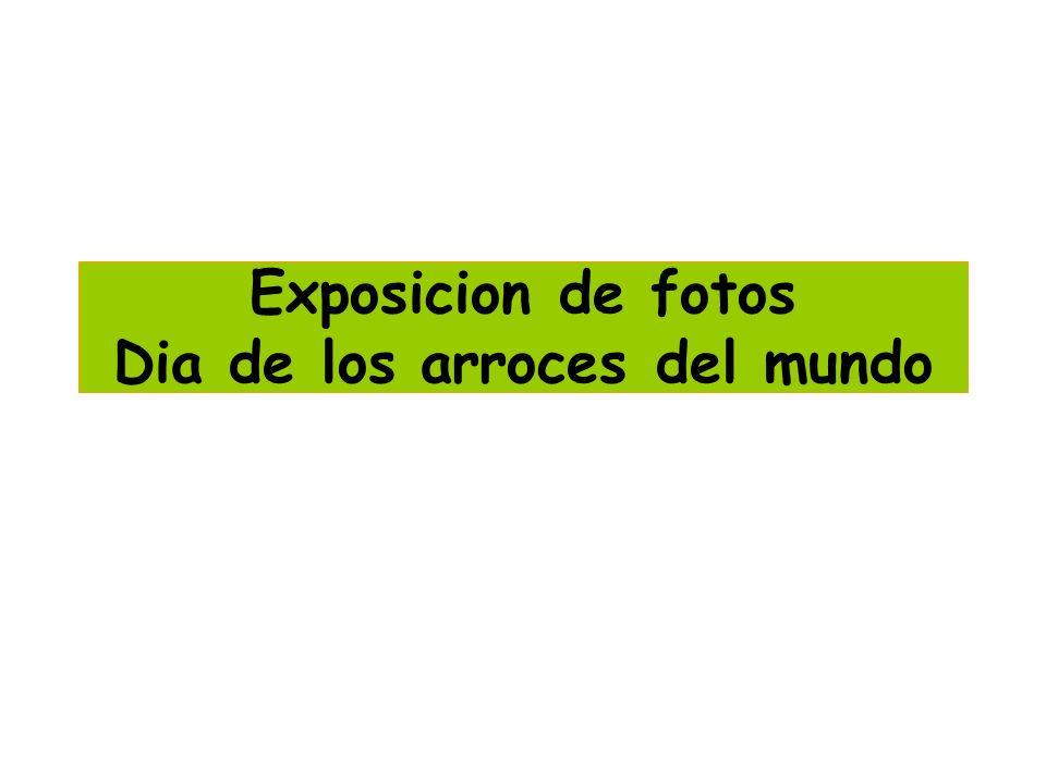 Exposicion de fotos Dia de los arroces del mundo