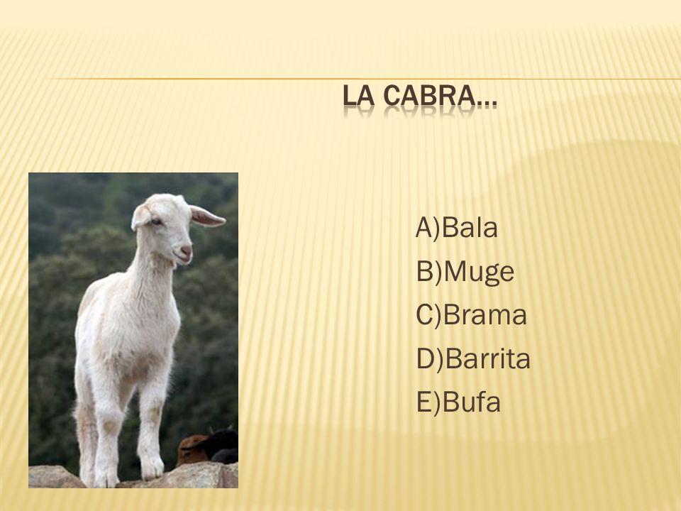 A)Bala B)Muge C)Brama D)Barrita E)Bufa