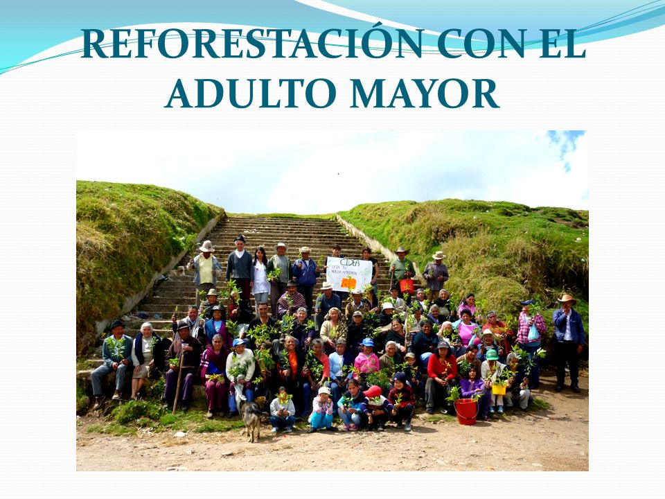 REFORESTACIÓN CON EL ADULTO MAYOR