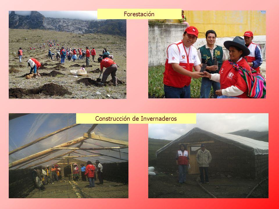 Forestación Construcción de Invernaderos