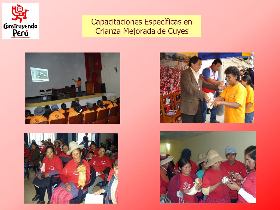Capacitaciones Específicas en Crianza Mejorada de Cuyes