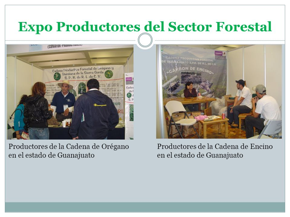 Expo Productores del Sector Forestal Productores de la Cadena de Orégano en el estado de Guanajuato Productores de la Cadena de Encino en el estado de