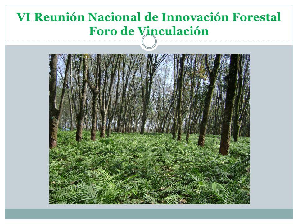 VI Reunión Nacional de Innovación Forestal Foro de Vinculación