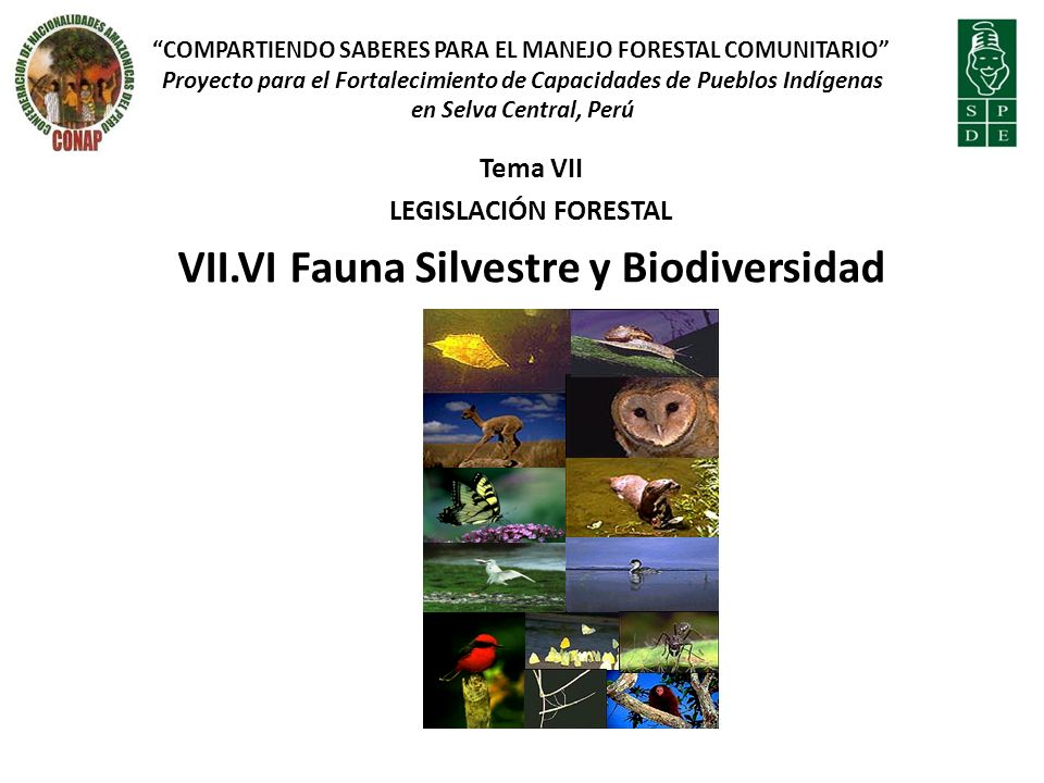 Tema VII LEGISLACIÓN FORESTAL VII.VI Fauna Silvestre y Biodiversidad COMPARTIENDO SABERES PARA EL MANEJO FORESTAL COMUNITARIO Proyecto para el Fortalecimiento de Capacidades de Pueblos Indígenas en Selva Central, Perú