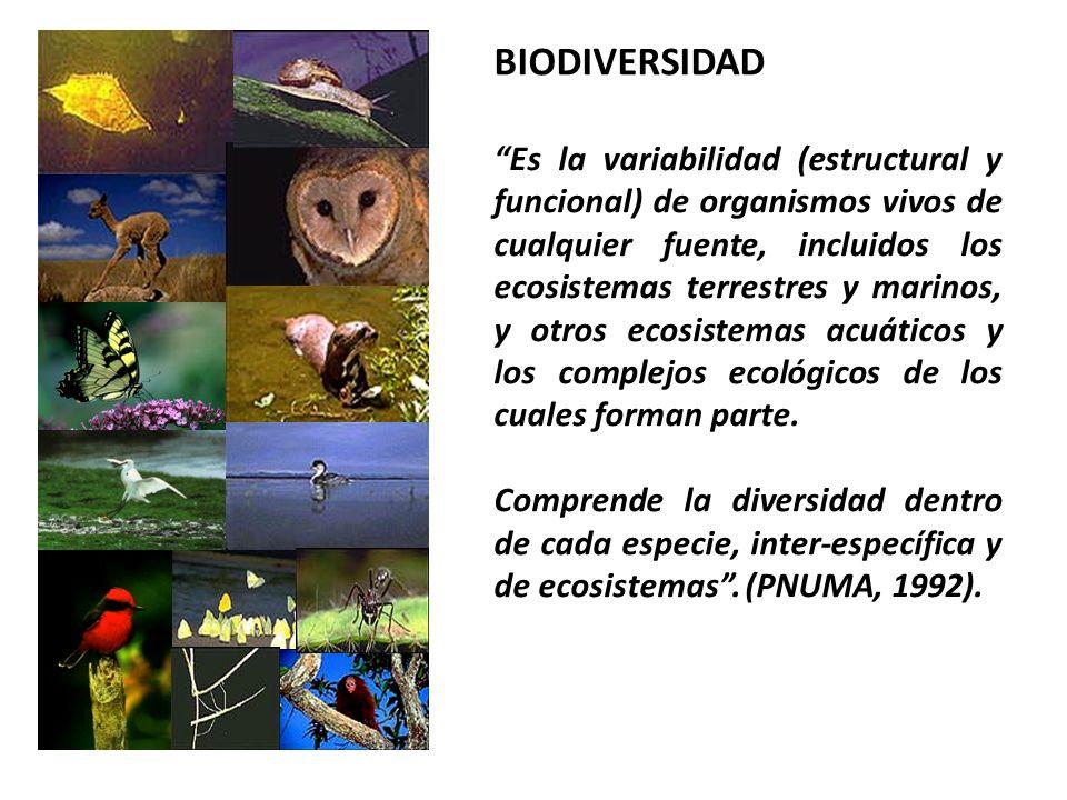 BIODIVERSIDAD Es la variabilidad (estructural y funcional) de organismos vivos de cualquier fuente, incluidos los ecosistemas terrestres y marinos, y otros ecosistemas acuáticos y los complejos ecológicos de los cuales forman parte.