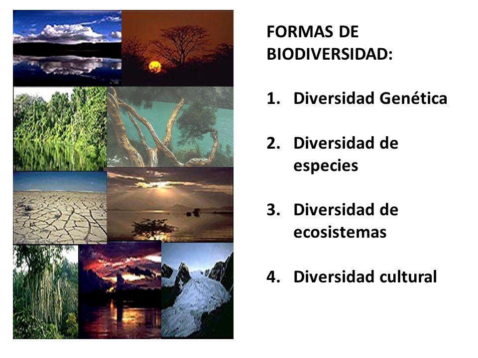 FORMAS DE BIODIVERSIDAD: 1.Diversidad Genética 2.Diversidad de especies 3.Diversidad de ecosistemas 4.Diversidad cultural