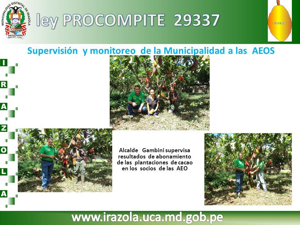 Supervisión y monitoreo de la Municipalidad a las AEOS Alcalde Gambini supervisa resultados de abonamiento de las plantaciones de cacao en los socios