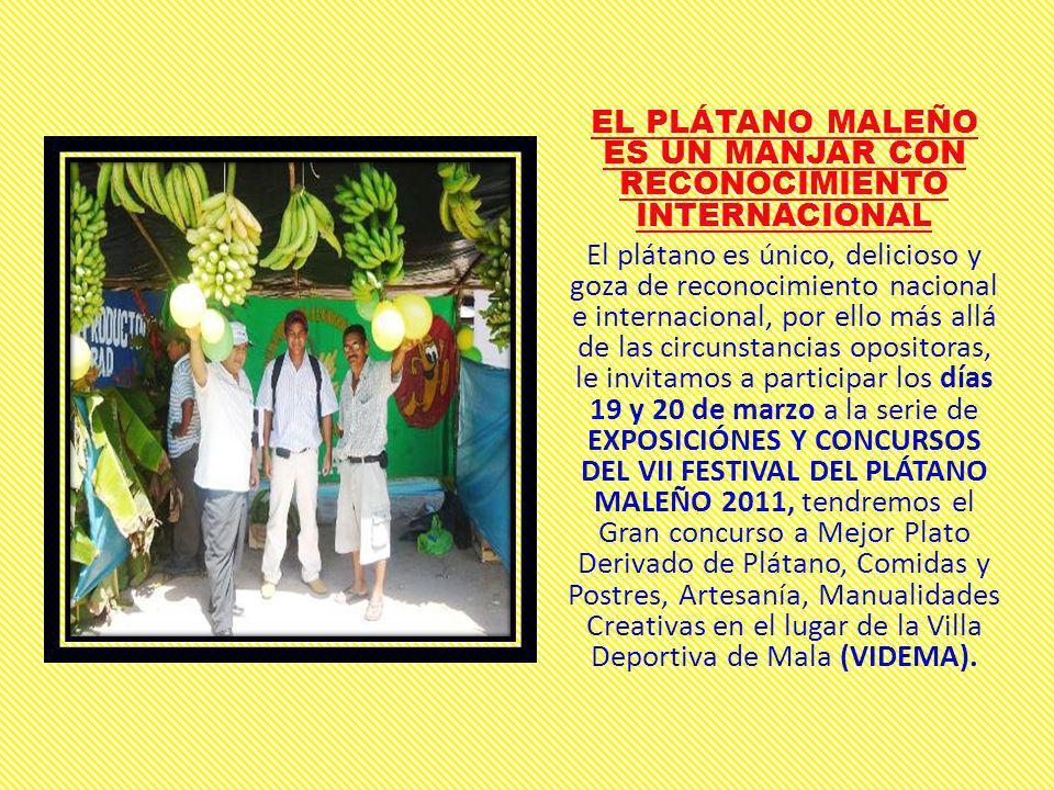 EL PLÁTANO MALEÑO ES UN MANJAR CON RECONOCIMIENTO INTERNACIONAL El plátano es único, delicioso y goza de reconocimiento nacional e internacional, por