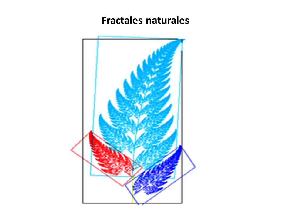 Fractales naturales