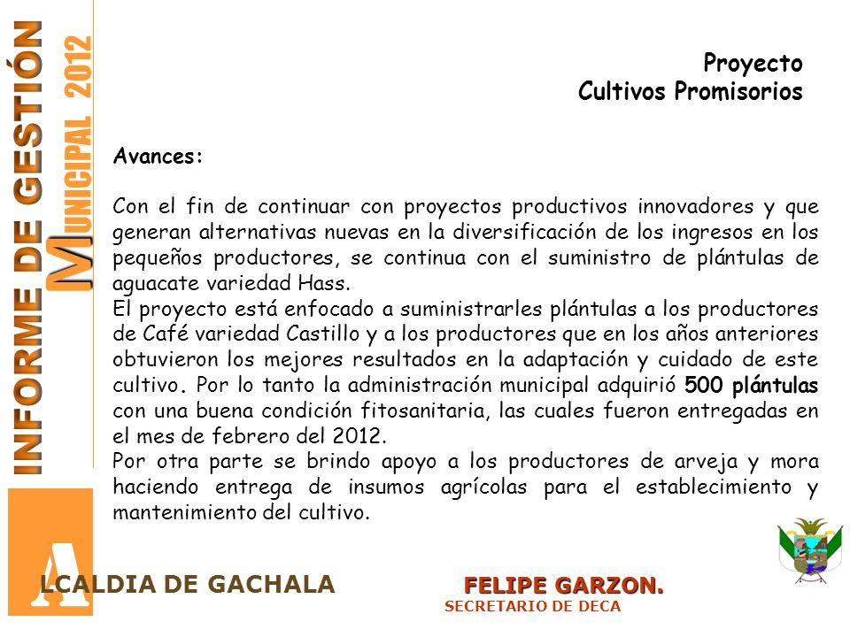 M M UNICIPAL 2012 A FELIPE GARZON. LCALDIA DE GACHALA FELIPE GARZON. SECRETARIO DE DECA Proyecto Cultivos Promisorios Avances: Con el fin de continuar
