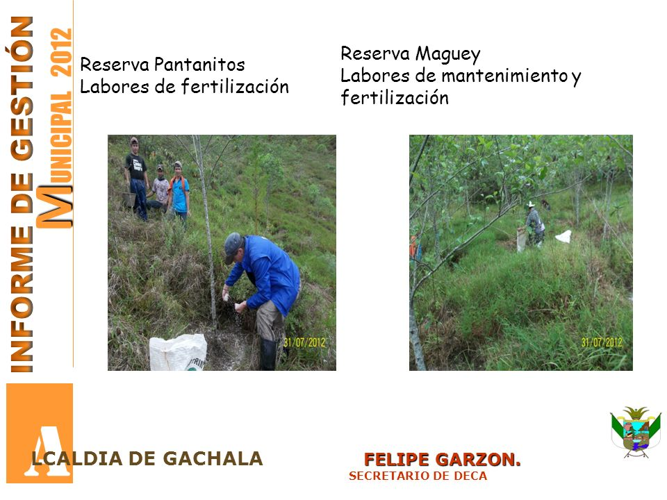 M M UNICIPAL 2012 A FELIPE GARZON. LCALDIA DE GACHALA FELIPE GARZON. SECRETARIO DE DECA Reserva Pantanitos Labores de fertilización Reserva Maguey Lab