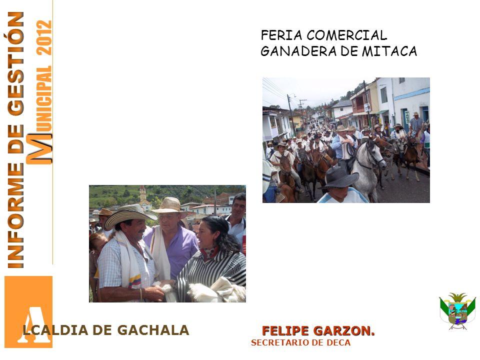 M M UNICIPAL 2012 A FELIPE GARZON. LCALDIA DE GACHALA FELIPE GARZON. SECRETARIO DE DECA FERIA COMERCIAL GANADERA DE MITACA