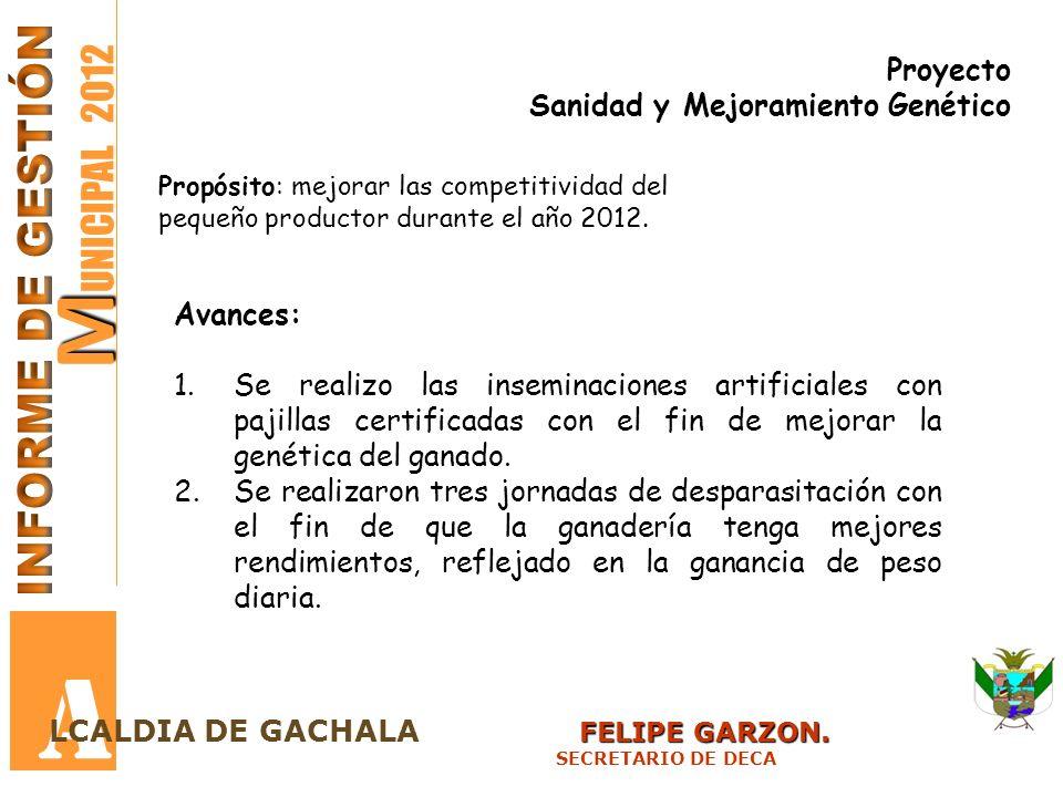 M M UNICIPAL 2012 A FELIPE GARZON. LCALDIA DE GACHALA FELIPE GARZON. SECRETARIO DE DECA Proyecto Sanidad y Mejoramiento Genético Propósito: mejorar la