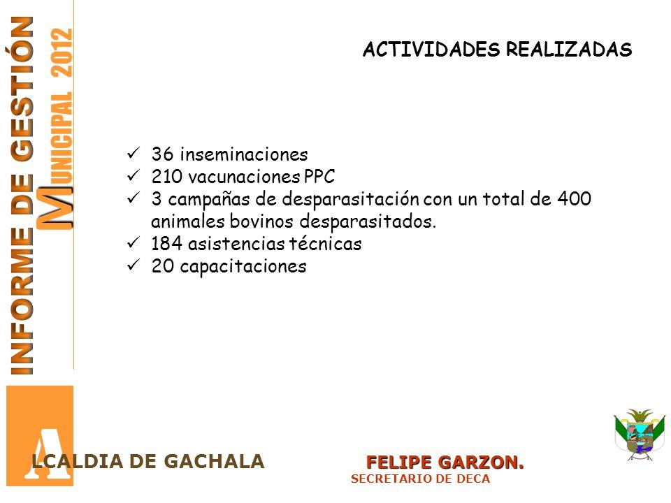 M M UNICIPAL 2012 A FELIPE GARZON. LCALDIA DE GACHALA FELIPE GARZON. SECRETARIO DE DECA ACTIVIDADES REALIZADAS 36 inseminaciones 210 vacunaciones PPC
