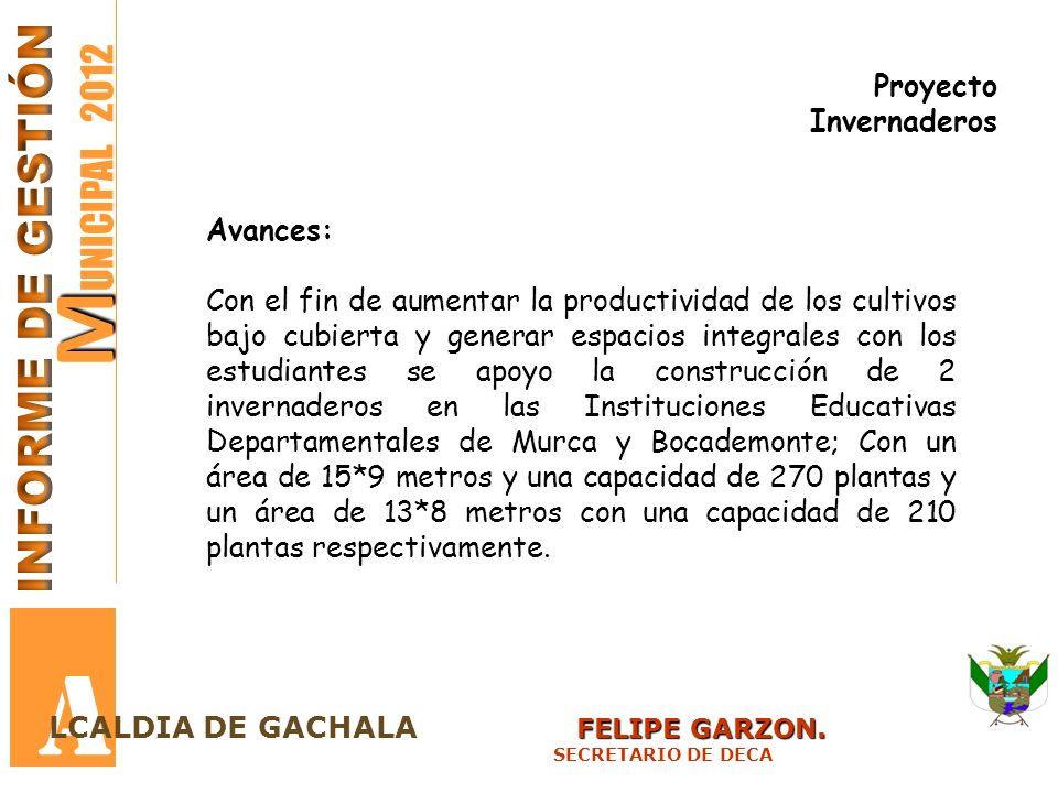 M M UNICIPAL 2012 A FELIPE GARZON. LCALDIA DE GACHALA FELIPE GARZON. SECRETARIO DE DECA Proyecto Invernaderos Avances: Con el fin de aumentar la produ