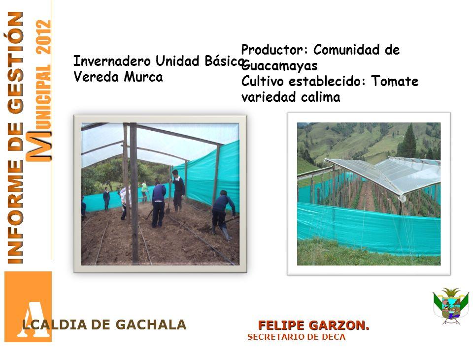 M M UNICIPAL 2012 A FELIPE GARZON. LCALDIA DE GACHALA FELIPE GARZON. SECRETARIO DE DECA Invernadero Unidad Básica Vereda Murca Productor: Comunidad de