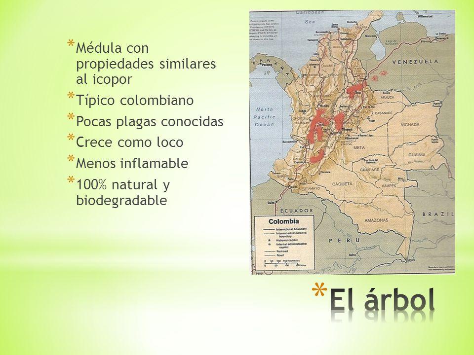 * Médula con propiedades similares al icopor * Típico colombiano * Pocas plagas conocidas * Crece como loco * Menos inflamable * 100% natural y biodegradable