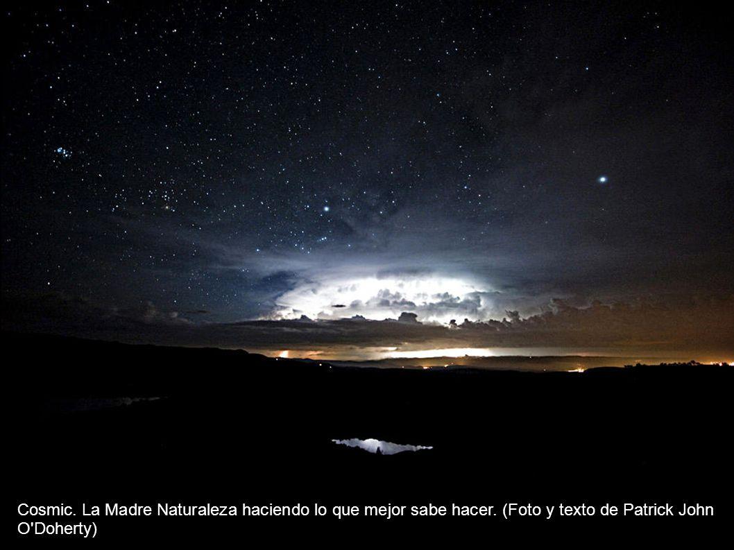El archipìélago Fernando de Noronha, Brazil está considerado como un santuario de la vida salvaje, pero hoy, incluso en este archipiélago aislado, los