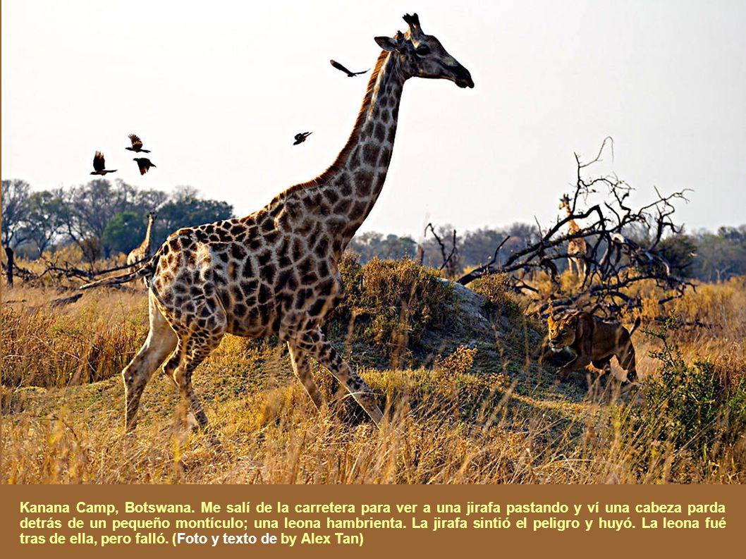 Una vez más National Geographic mantiene su Concurso Fotográfico Anual, con fecha final para la entrega de los trabajos el 30 de Noviembre. Las pasada