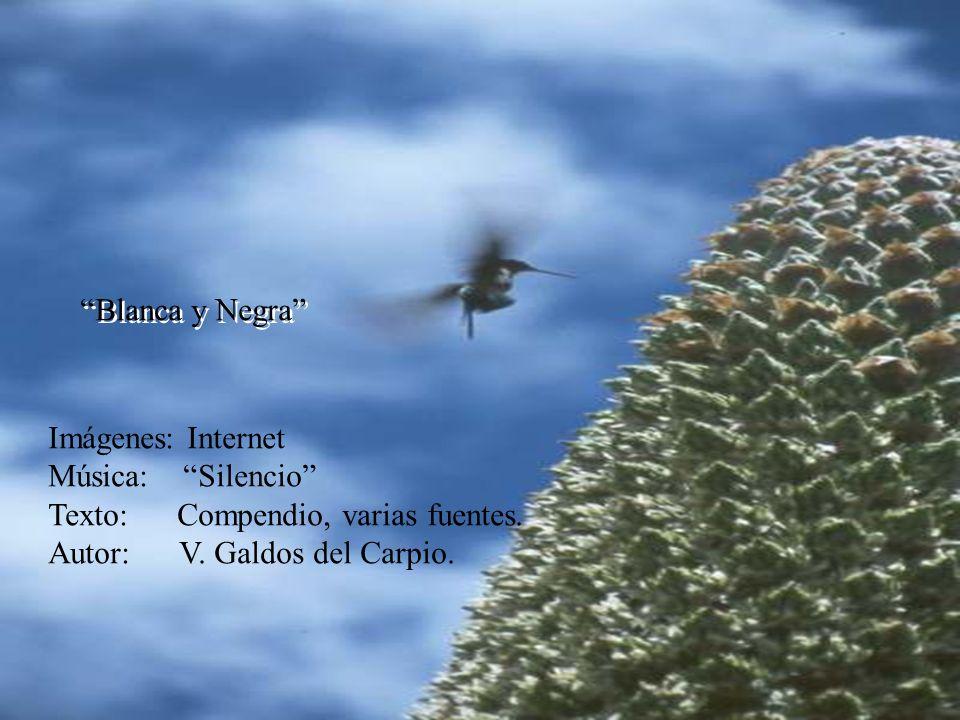 La Pirámide Alpamayo es uno de esos cerros que roban el aliento, que atonta y hace soñar...