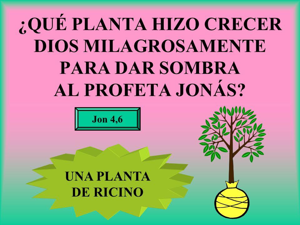 ¿QUÉ PLANTA HIZO CRECER DIOS MILAGROSAMENTE PARA DAR SOMBRA AL PROFETA JONÁS? Jon 4,6 UNA PLANTA DE RICINO