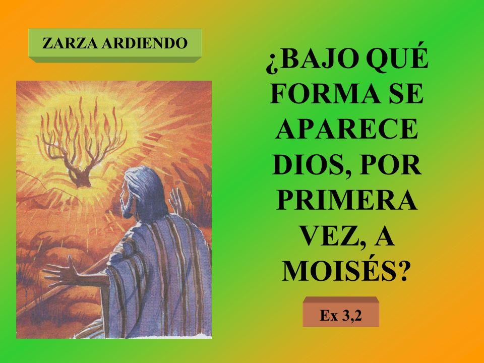 ¿BAJO QUÉ FORMA SE APARECE DIOS, POR PRIMERA VEZ, A MOISÉS? ZARZA ARDIENDO Ex 3,2