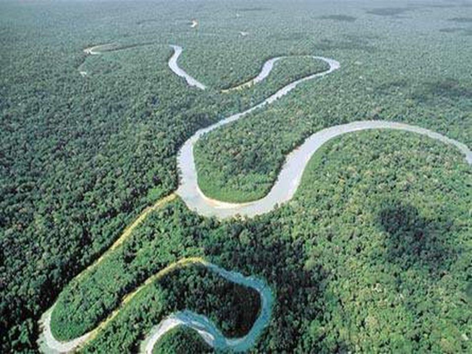 Es la selva tropical más extensa del mundo. Se considera que su extensión llega a los 6.000.000 de km² repartidos entre nueve países sudamericanos: Br