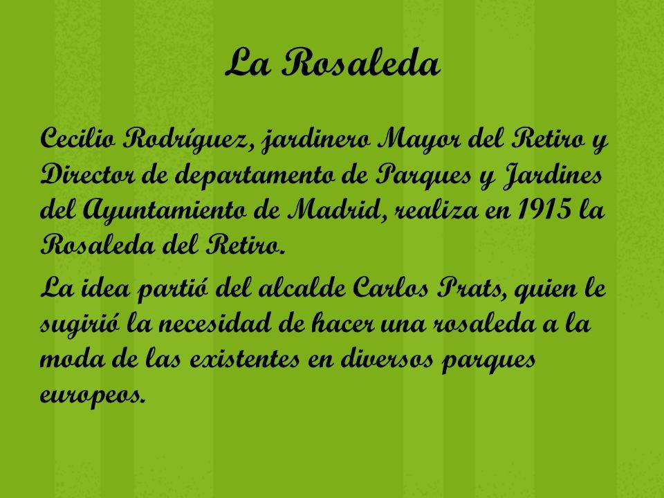 La Rosaleda Cecilio Rodríguez, jardinero Mayor del Retiro y Director de departamento de Parques y Jardines del Ayuntamiento de Madrid, realiza en 1915