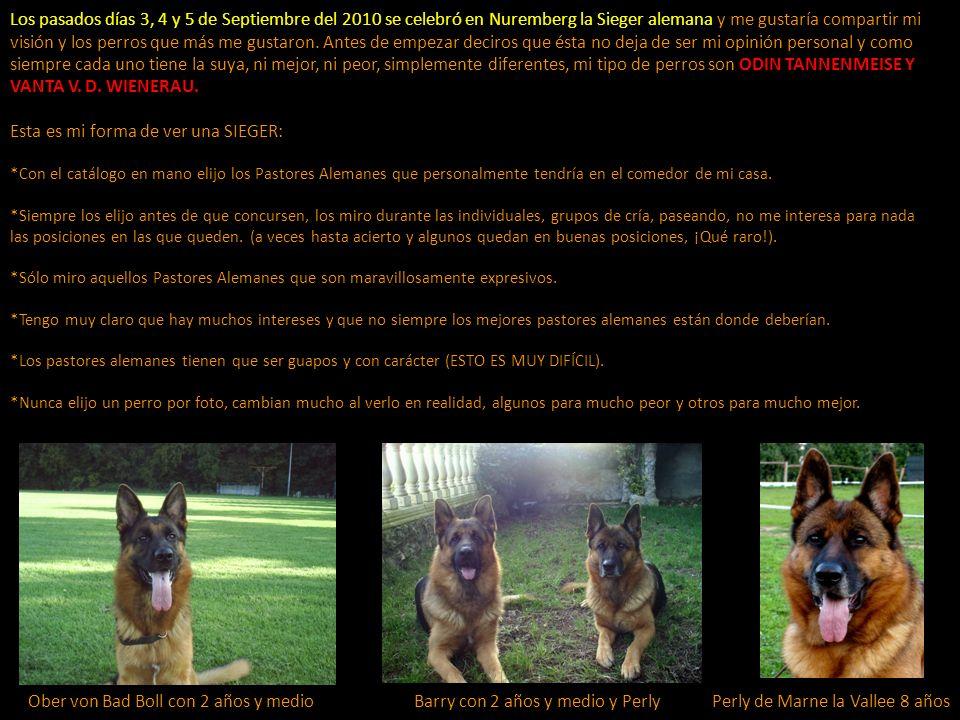 Los pasados días 3, 4 y 5 de Septiembre del 2010 se celebró en Nuremberg la Sieger alemana y me gustaría compartir mi visión y los perros que más me g