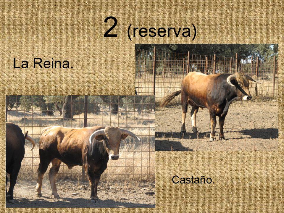 2 (reserva) Castaño. La Reina.