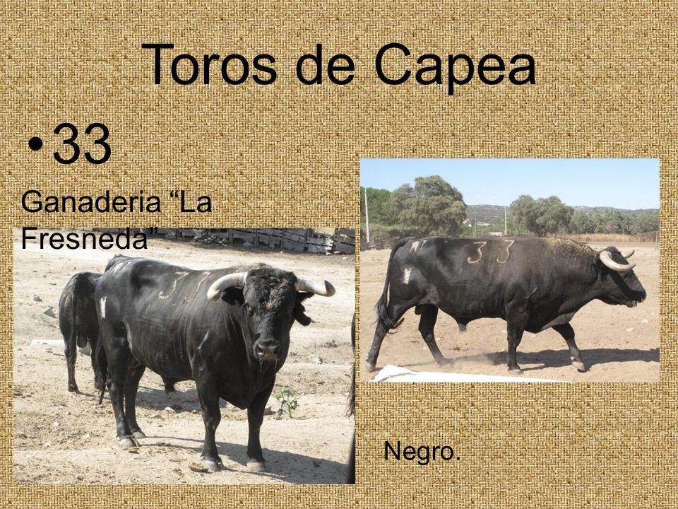 Toros de Capea 33 Negro. Ganaderia La Fresneda
