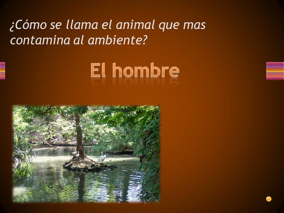 ¿Cómo se llama el animal que mas contamina al ambiente?