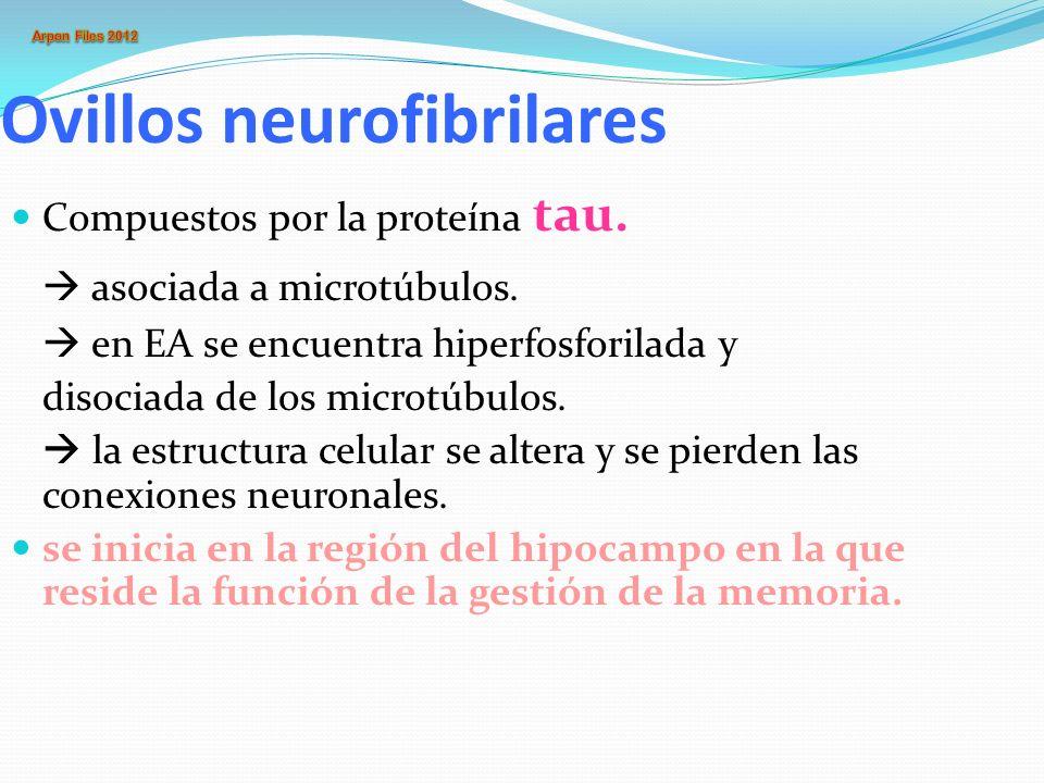 Los ovillos neurofibrilares se encontrarían asociados a la gran deficiencia de ACh que presentan individuos con EA, debido a la atrofia y degeneración de las neuronas colinérgicas subcorticales (Núcleo de Maynert).