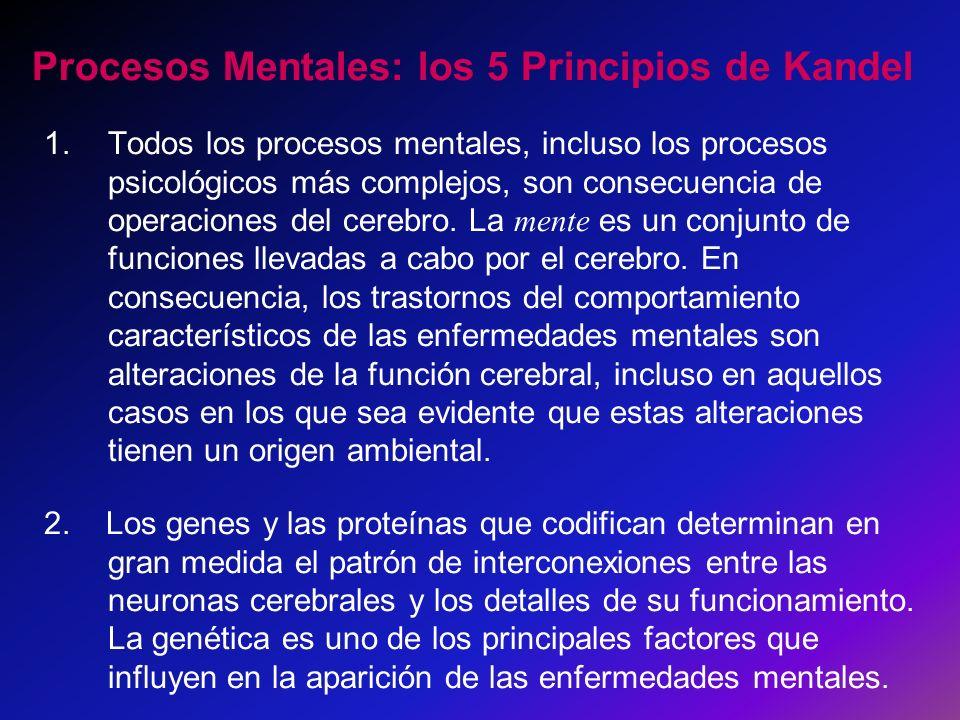 Procesos Mentales: los 5 Principios de Kandel 1.Todos los procesos mentales, incluso los procesos psicológicos más complejos, son consecuencia de oper