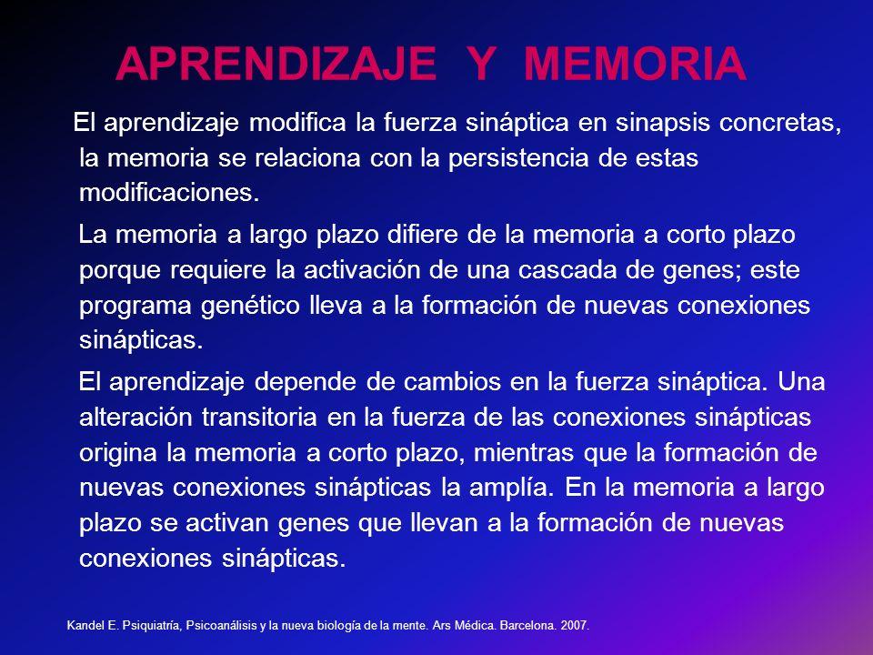 APRENDIZAJE Y MEMORIA El aprendizaje modifica la fuerza sináptica en sinapsis concretas, la memoria se relaciona con la persistencia de estas modificaciones.
