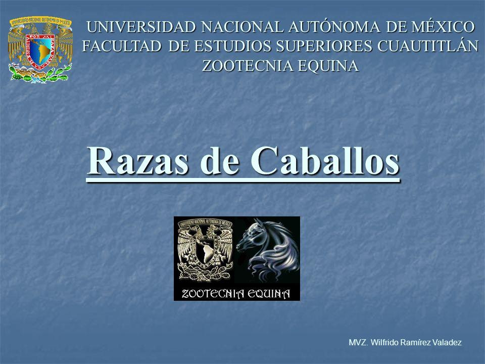 UNIVERSIDAD NACIONAL AUTÓNOMA DE MÉXICO FACULTAD DE ESTUDIOS SUPERIORES CUAUTITLÁN ZOOTECNIA EQUINA Razas de Caballos MVZ.