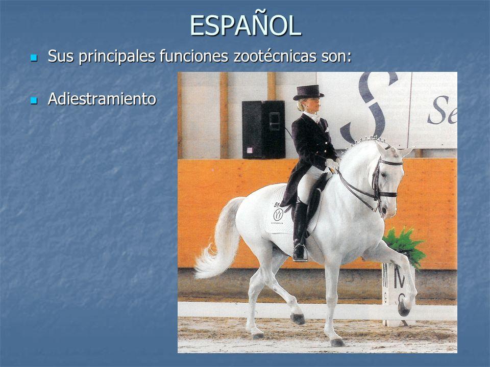 ESPAÑOL Sus principales funciones zootécnicas son: Sus principales funciones zootécnicas son: Adiestramiento Adiestramiento
