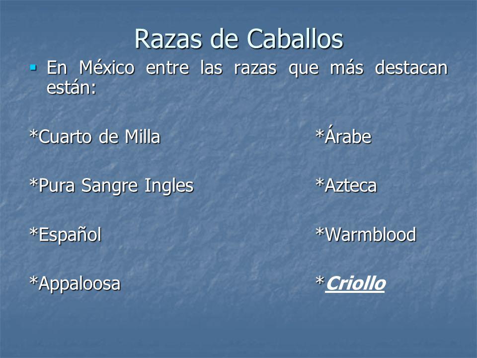 Razas de Caballos En México entre las razas que más destacan están: En México entre las razas que más destacan están: *Cuarto de Milla*Árabe *Pura Sangre Ingles*Azteca *Español*Warmblood *Appaloosa* *Appaloosa*Criollo