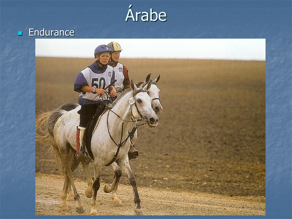 Árabe Endurance Endurance