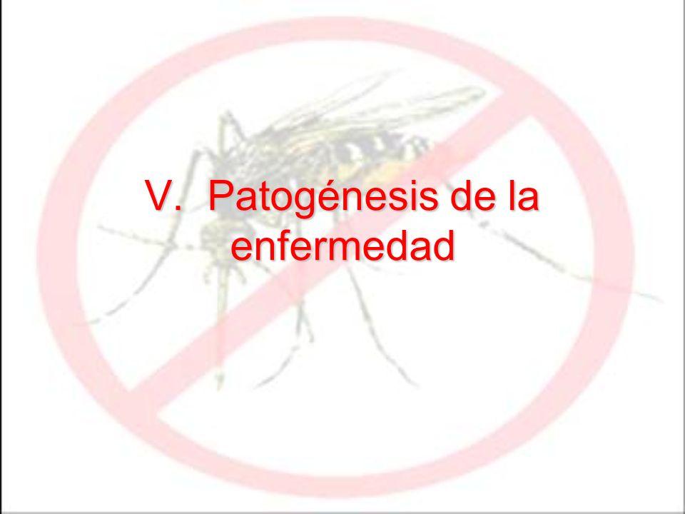 V. Patogénesis de la enfermedad