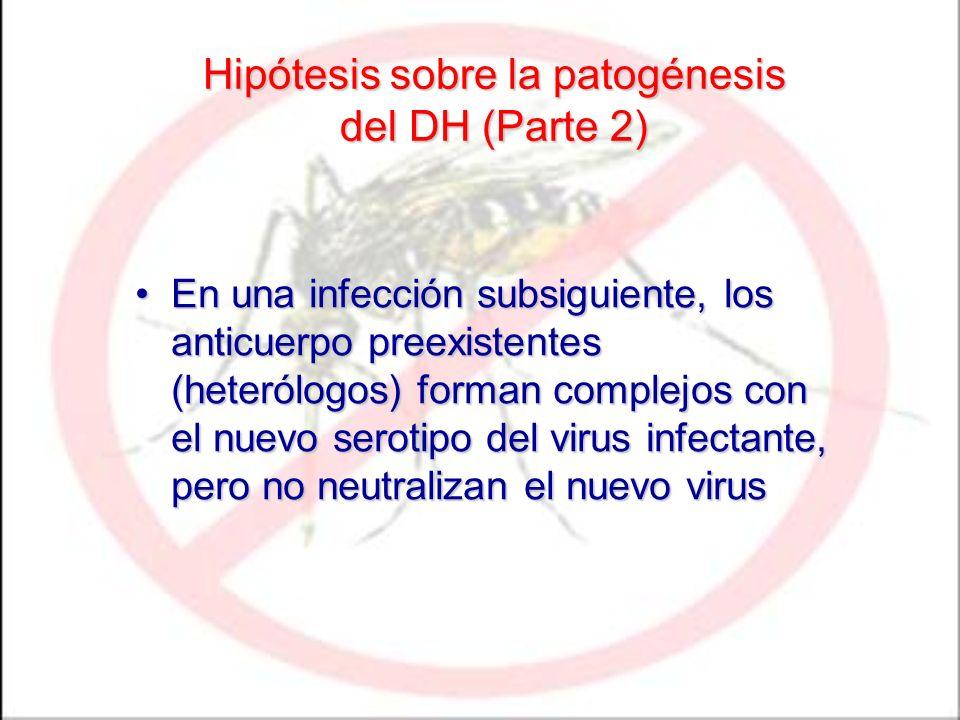 Hipótesis sobre la patogénesis del DH (Parte 2) En una infección subsiguiente, los anticuerpo preexistentes (heterólogos) forman complejos con el nuev